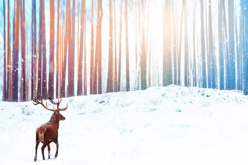 Fototapete - Lonely noble deer against winter fairy forest. Snowfall. Winter Christmas holiday image.