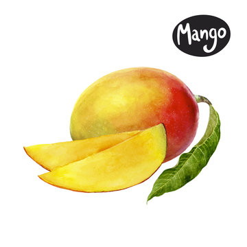 mango watercolor illustration
