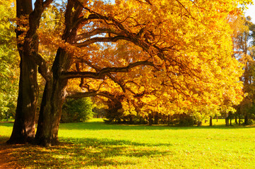 Autumn picturesque landscape. Autumn trees with yellowed foliage in sunny October park lit by sunshine