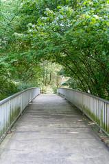 Brücke unter Bäumen