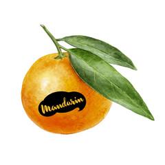 tangerine watercolor illustration
