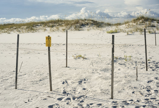 Endangered Sea Turtle Nest Protection at Florida Beach