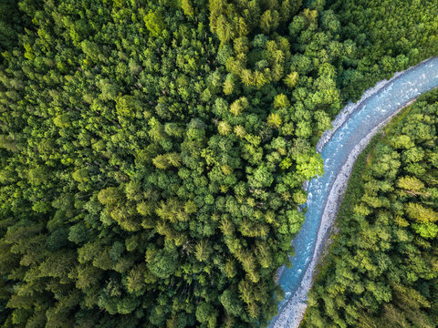 Aerial top view of summer green trees in forest with a splendid mountain river in Swiss Alps