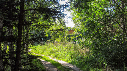 Summer, forest, road and building
