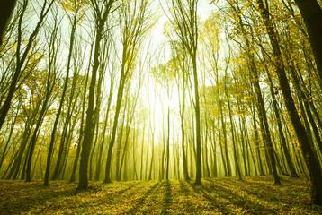 forest sunlight in autumn