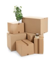Cardboard boxes and houseplant on white background. Moving day