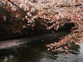 Japan Tokyo Meguro river Spring
