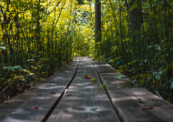 Green Nature Wooden Path Leading to Stream