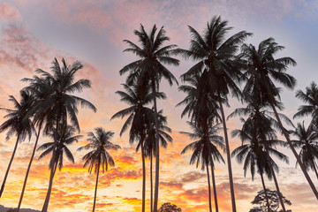 Palm trees on a colourful sunset background