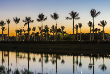 Silhouette of palm trees covered in Christmas lights reflecting in pond at sunset