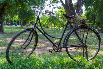 Old vintage bicycle on green grass background