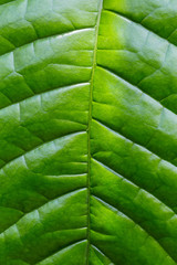Close-up of green leaf nature background
