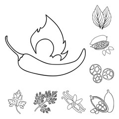 Herb and spices outline icons in set collection for design.Different kinds of seasonings vector symbol stock web illustration.