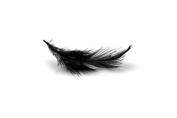 Close-up of small black feather isolated on white