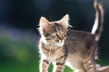cute little cat in the garden