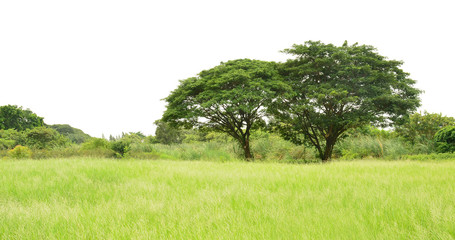Wide angle view of big trees in the green field,natural or environmental concept.