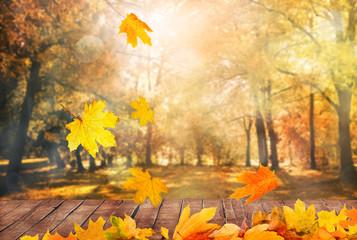 autumn trees background