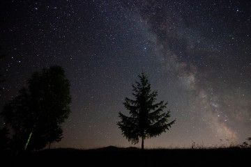 milky way at night and green fir tree