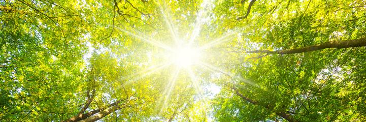 Fotorollo Gelb Laubwald im Frühling mit Sonnenstrahlen