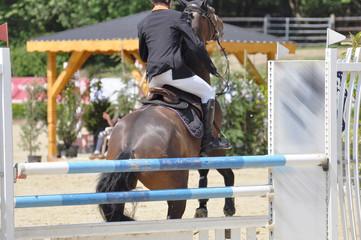 Reitsport Verweigerung beim Springreiten, das Springpferd verweigert den Hindernissprung, bei Ungehorsam vor einem einfachen Hindernis oder dem Sprung