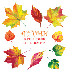 Watercolor pattern, autumn leaves on a white background.