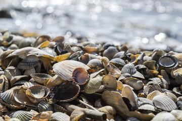 The seashells on the sand of the coast. Close up.