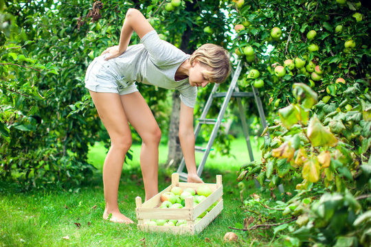 Woman with a strong pain in low part of the back while collecting apples in the garden. Medicine, healthcare and people concept