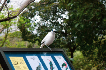 香港公園 鳥