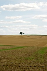 Arbres solitaires dans la campagne française (Yonne Bourgogne France)