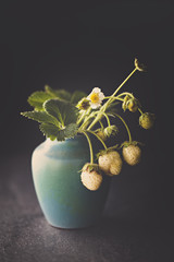 Unreife Erdbeeren in Vase