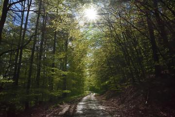 Die Forststraße im Frühlings Wald