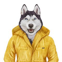 Portrait of Husky in yellow jacket, hand-drawn illustration