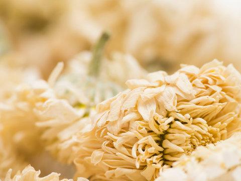 Roman chamomile macro