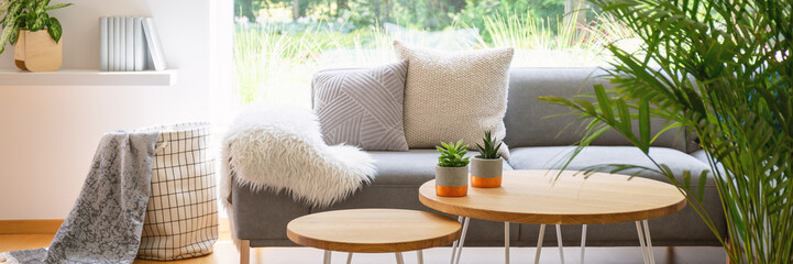 Panorama of plants on wooden table in front of grey sofa in scandi living room interior. Real photo Wall mural