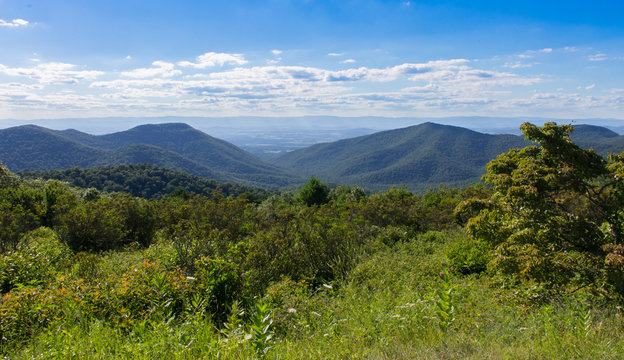 The Shenandoah Valley from a lookout at Skyline Drive with wild flowers
