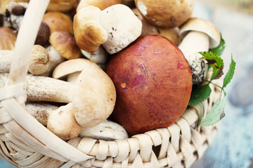 Variety of uncooked wild forest mushrooms in a basket