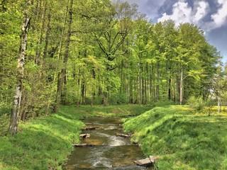 Wasser Flußlauf Fluß Bach mit Bäumen baumallee brandenburg lausitz spreewald