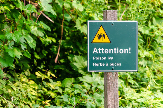 warning sign for poison ivy in English and French