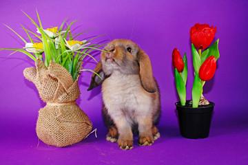 Cute bunny rabbit kit on colorful studio background