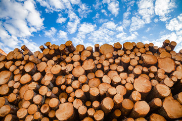 Stacked wood logs - lumber or timber industry concept