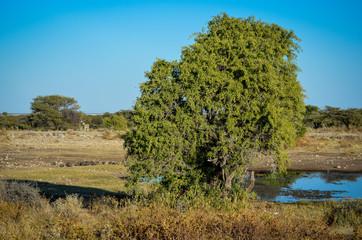Afrikanische Landschaft mit Baum