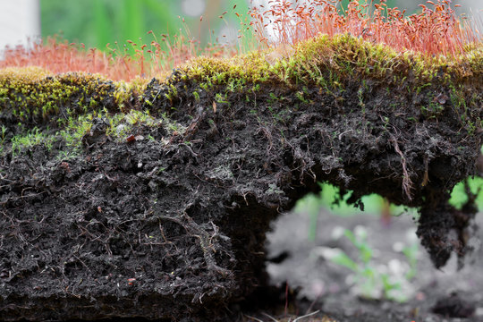 Soil structure, macro section