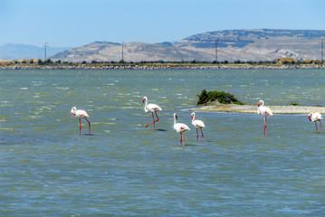 Izmir, Turkey, 26 May 2008: Flamingos and pelicans at Izmir Bird paradise