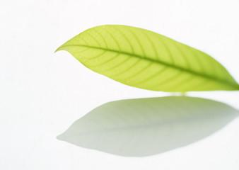 leaf isolate background