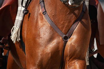 Saddle horse chest closeup