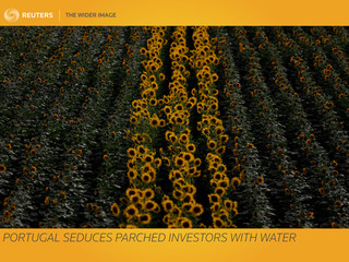 The Wider Image: Portugal seduces parched investors with water
