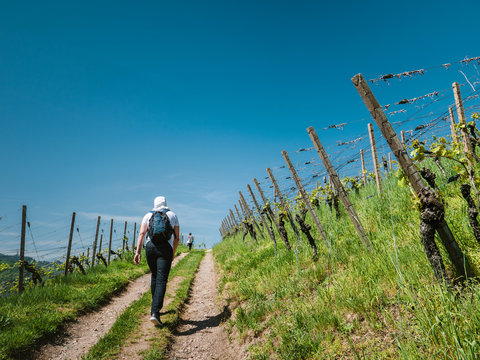 Rear view of unrecognizable man with backpack walking up rural road among green grape plantations in sunlight vineyard discovering the German vineyard in summer day