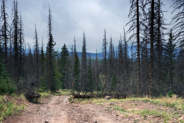 Country road in Rio Grande National Forest,  Colorado, US