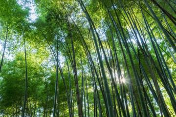 bamboo grove and sunshine