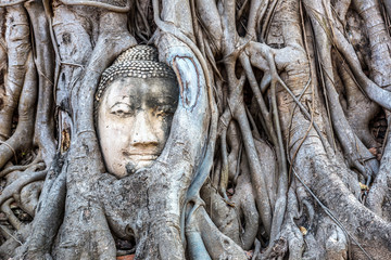 Foto op Canvas Asia land Ayutthaya Head of Buddha statue
